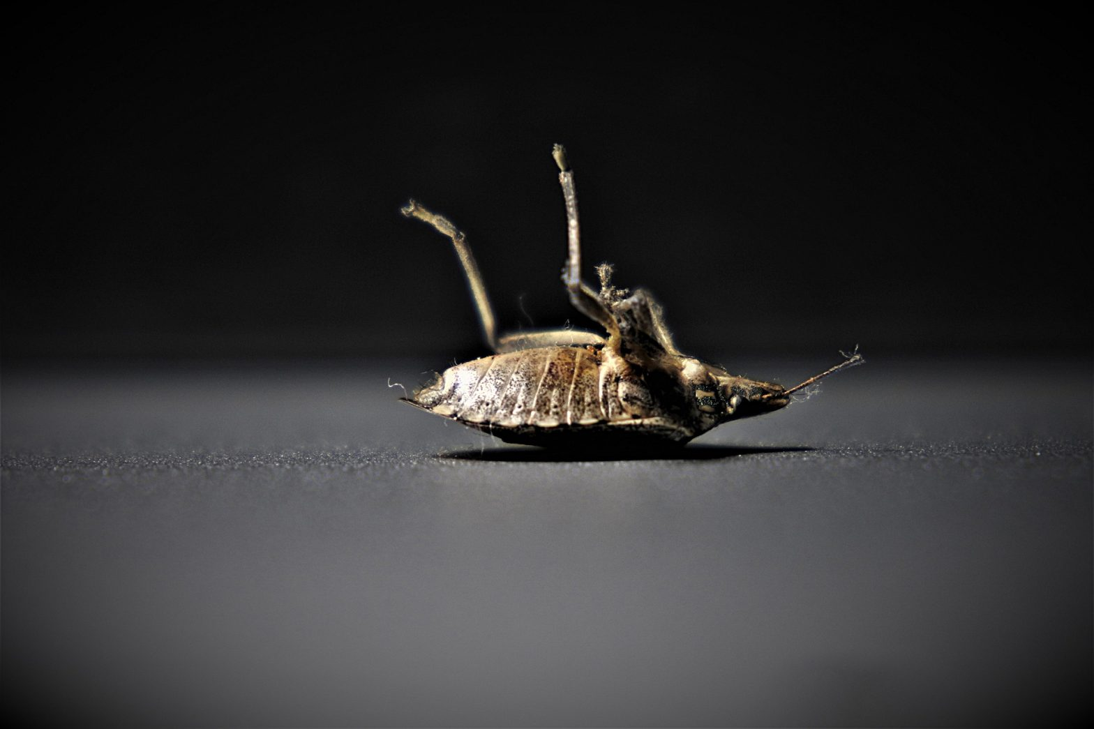 Why Is It So Hard To Get Rid Of Bed Bugs?